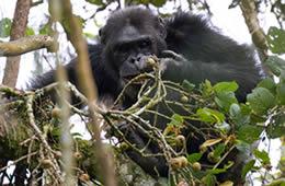 5 Days Primates Tracking Tour