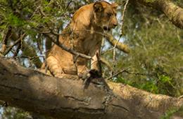12 Days Gorillas & Wildlife Safari