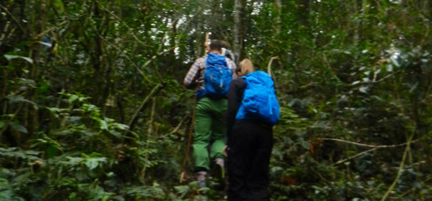 gorilla trekking in Bwindi national park