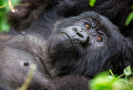 gorilla treks in rwanda